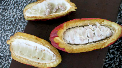 Open Cacao Beans