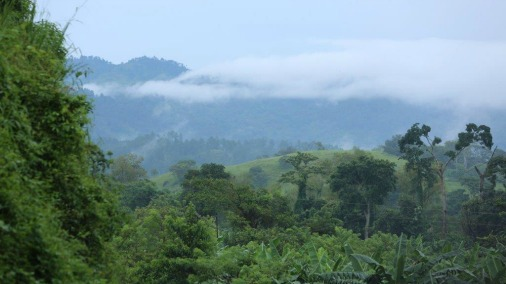 Honduras Copan Highlands.